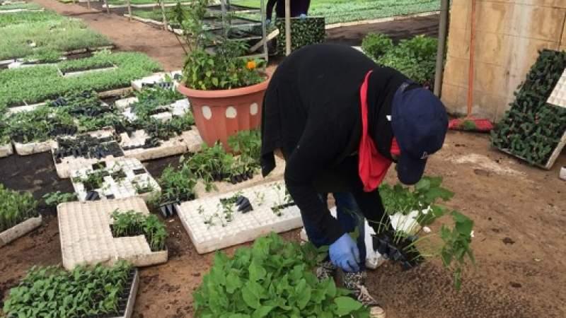 علمياً: الجهاد الزراعي والصناعي هو حل أيضاً لكورونا!