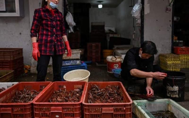 حيوانات برية من 38 نوعا كانت تباع في سوق ووهان قبل الجائحة.. ولكن!